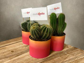 0-splash-kaktusy